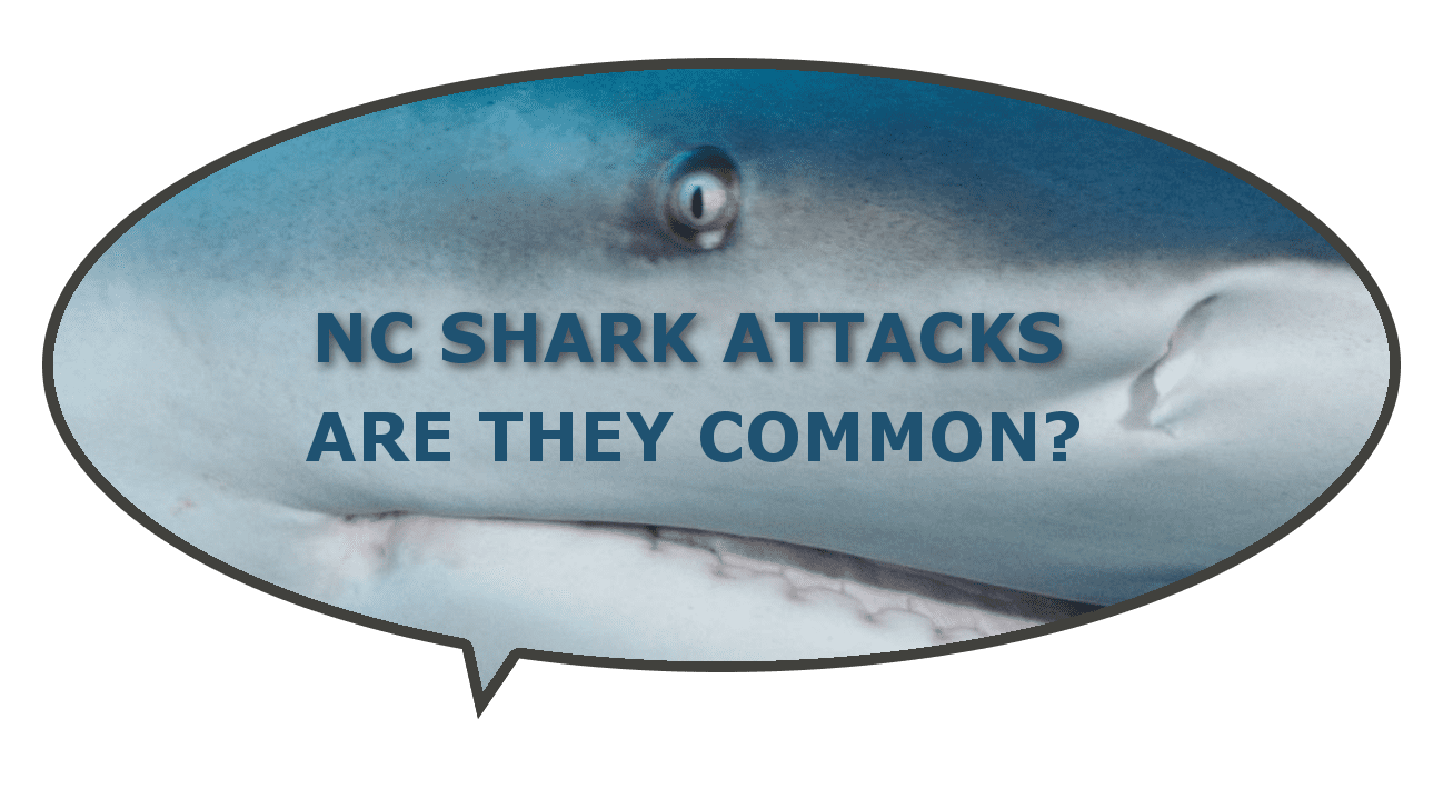Are Nc Shark Attacks Common At Beaches Locally