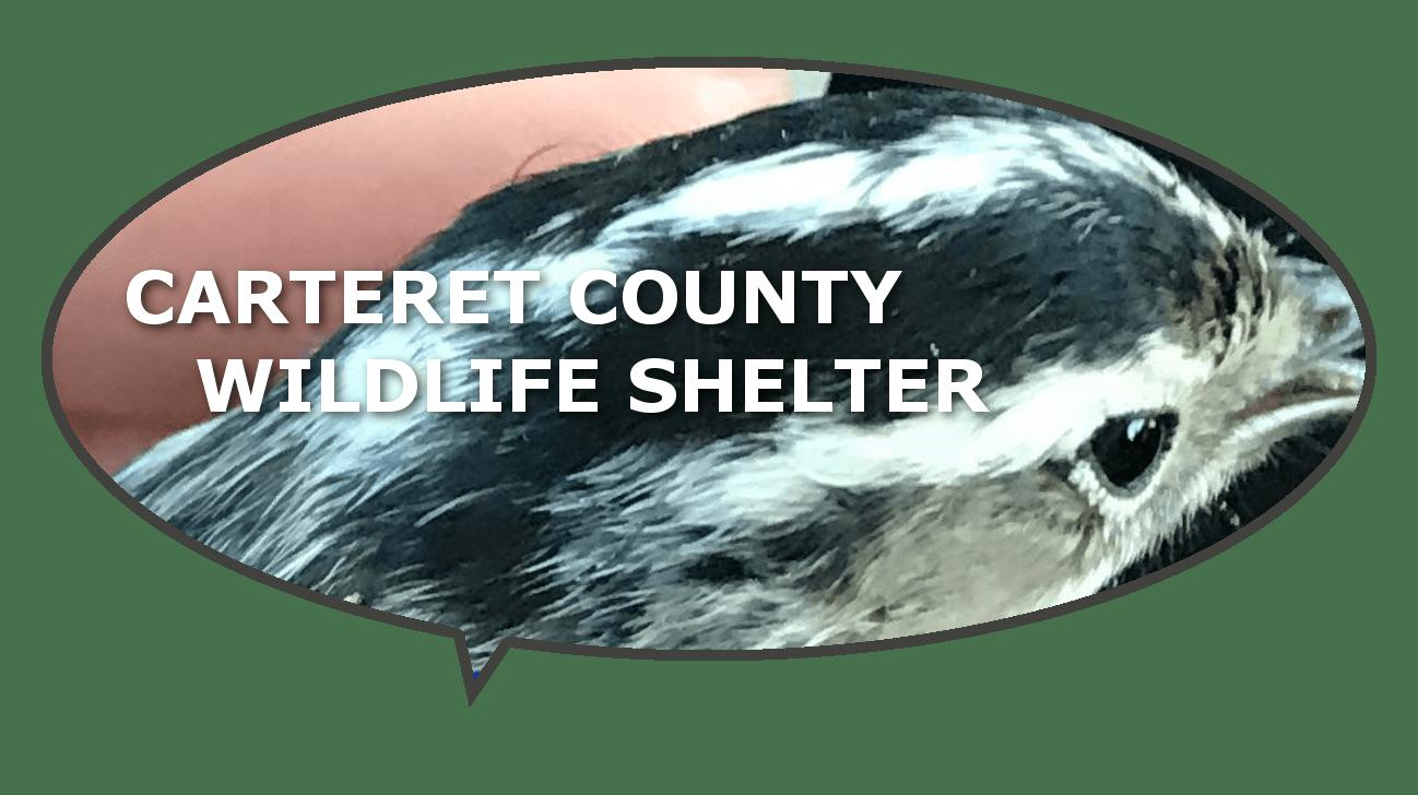 carteret county animal shelter